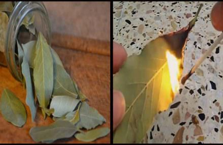 Just Burn A Bay Leaf In Your House. The Reason? You?ll Want To Try THIS Trick Right After Reading This!