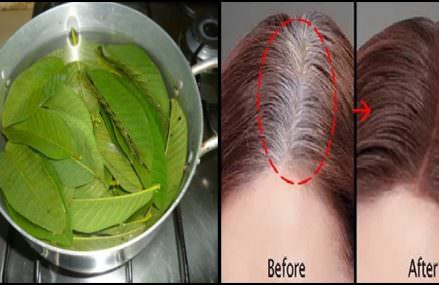 Guava Leaves Can Extremely 100% Stop Your Hair Loss and Make Your Hair Grow Like Crazy