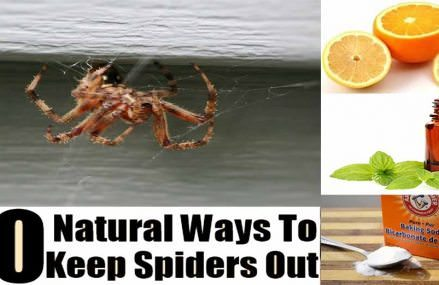 12 Natural Ways To Rid Your Home Of Spiders (No. 6 Will Do It FAST)