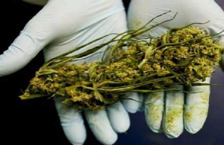U.S. Government Finally Admits Marijuana Really Does Kill Cancer Cells