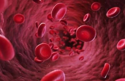 Study: Vegetarian Blood Is 8x More Effective At Killing Cancer Cells