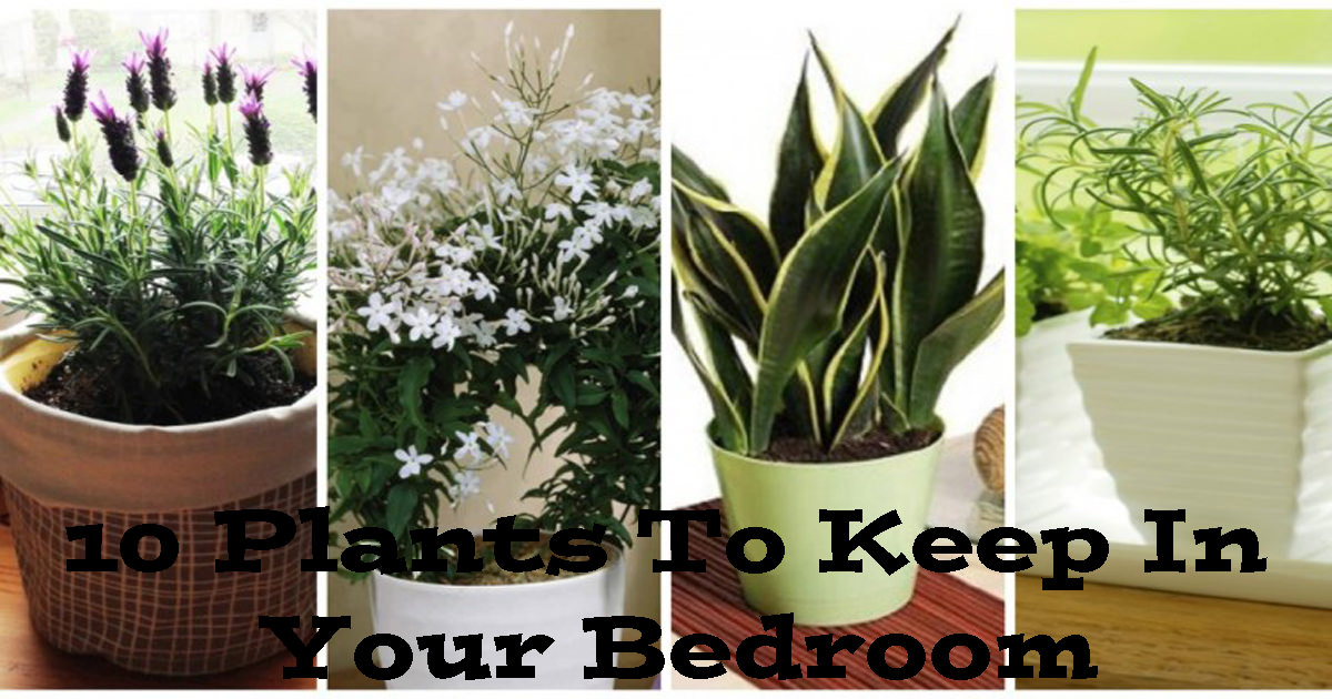The 10 Best Plants To Have In Your Bedroom To Help You