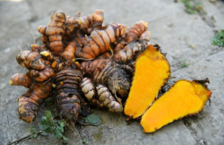 How to easily grow turmeric in the comfort of your own home
