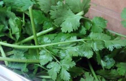 Cilantro Can Remove 80% of Heavy Metals From The Body