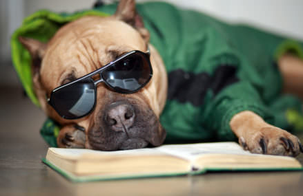 Can Old Dogs Teach us About Alzheimer?s Disease?
